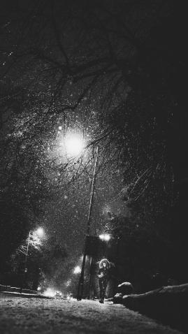 Cheltenham Snow Dec 17 pics-3