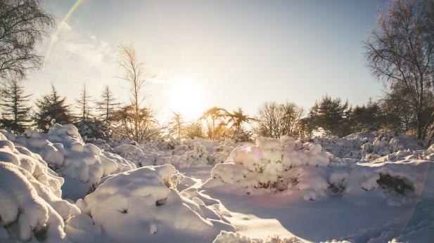 Leckhampton Hill snow-13