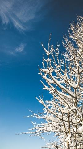 Leckhampton Hill snow-20