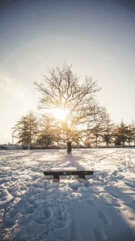 Leckhampton Hill snow-5