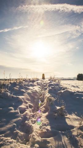 Leckhampton Hill snow-6